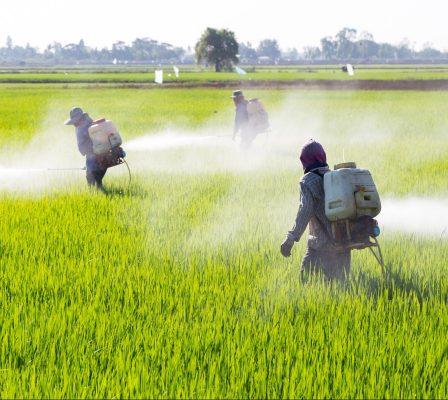 bigstock Farmer Spraying Pesticide In T 115992503 e1512838715268